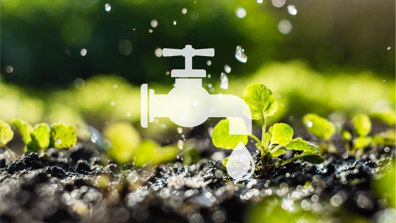 Hvordan er vandets vej fra regndråbe til vandhane?