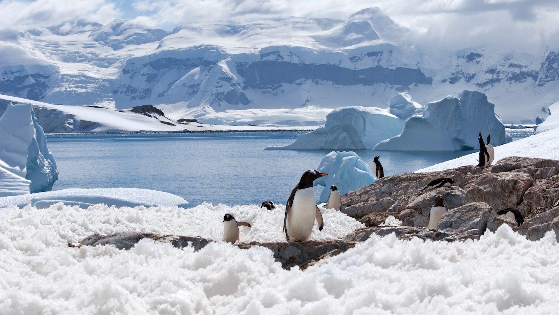 Selv i det kolde og øde Antarktis lever der dyr.