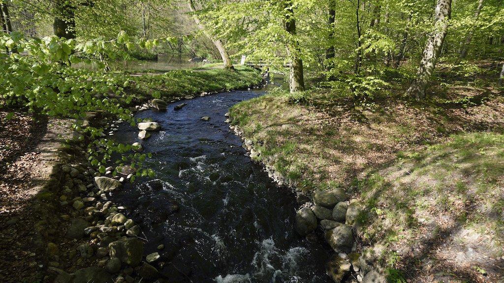 Vandløb er vigtige levesteder for dyr og planter, men det gælder om at holde fast.