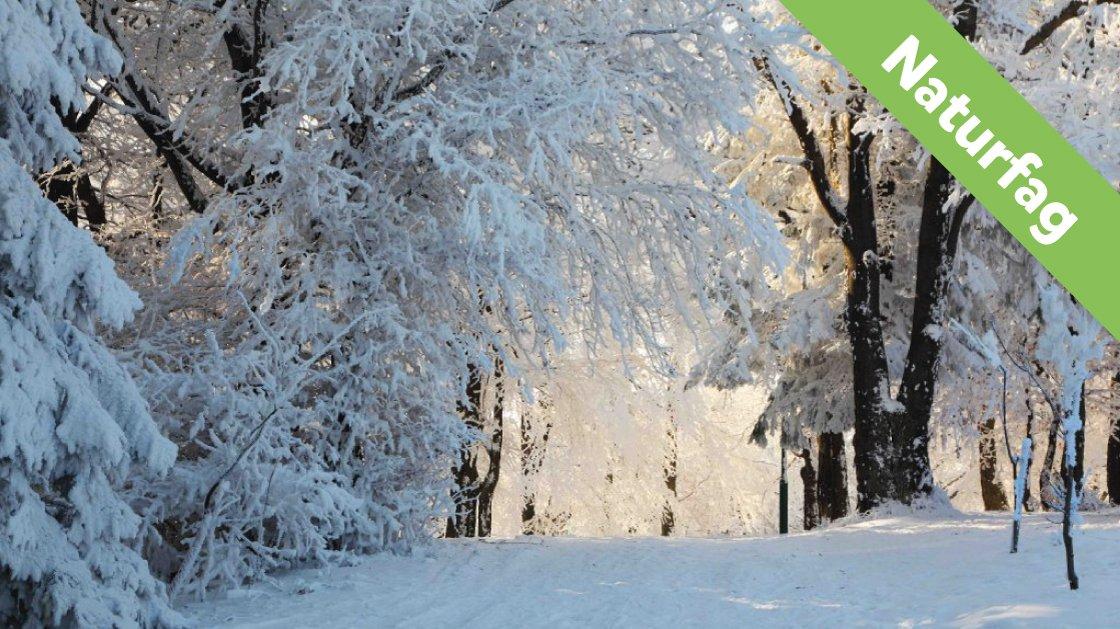 Vinter er en årstid.