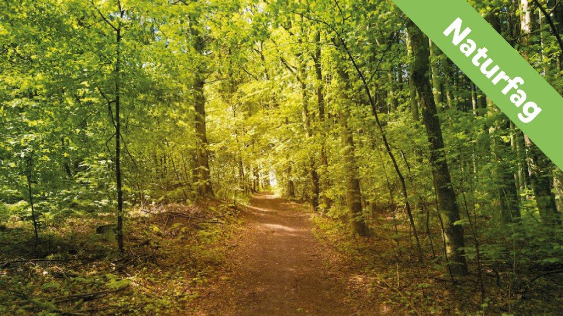 Skoven er smuk.