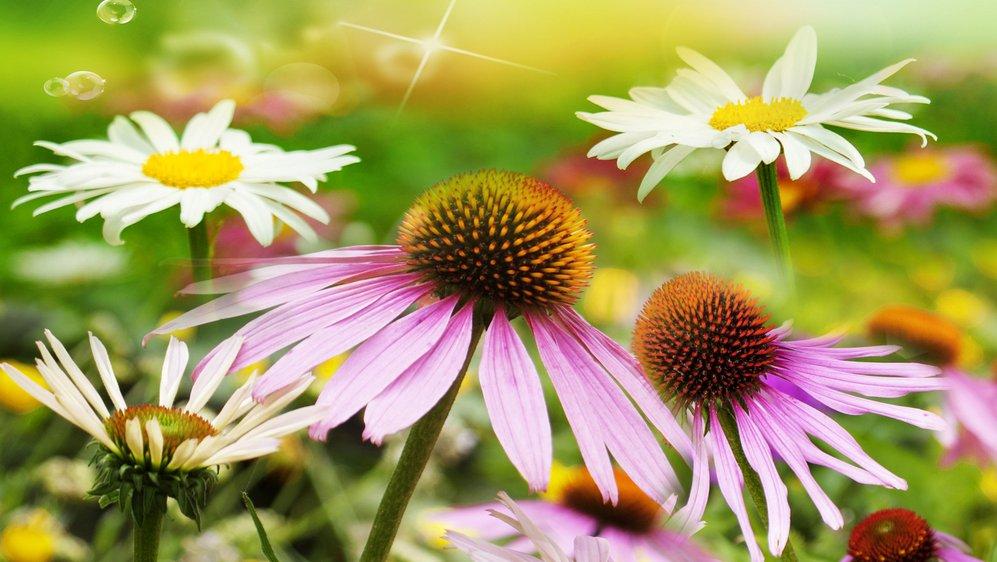 Planter bruger sollys, når de vokser. Det er ikke til at se med øjet. Men I kan lave undersøgelser, der viser det.