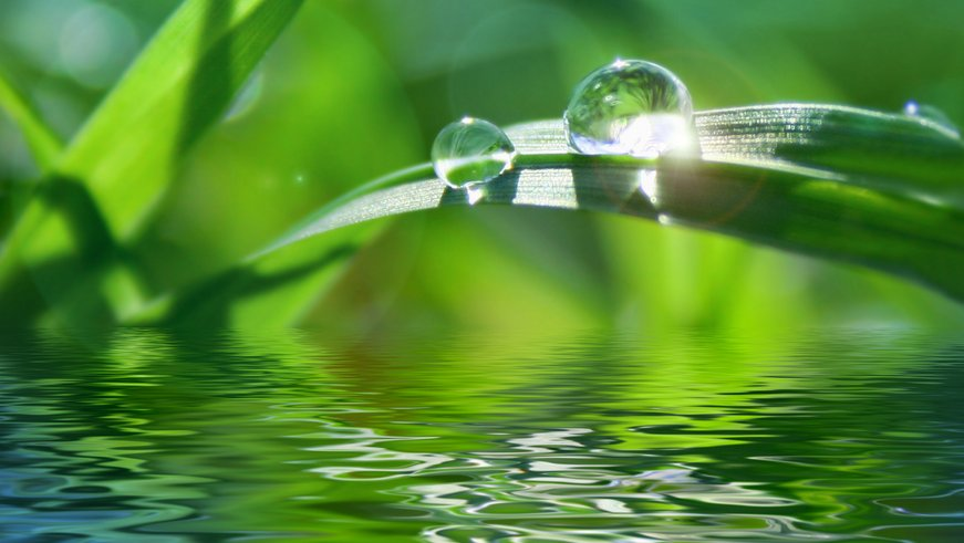 Vand og sollys er nødvendigt for, at planters fotosyntese kan finde sted. Kuldioxid er også nødvendig; den er bare sværere at se.
