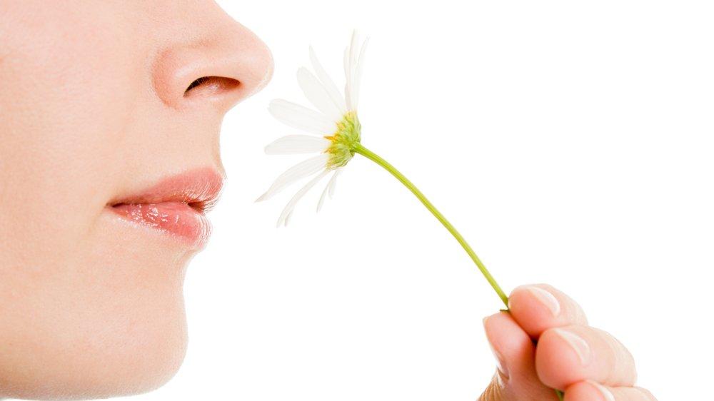 Lugtesansen er en af de fem sanser