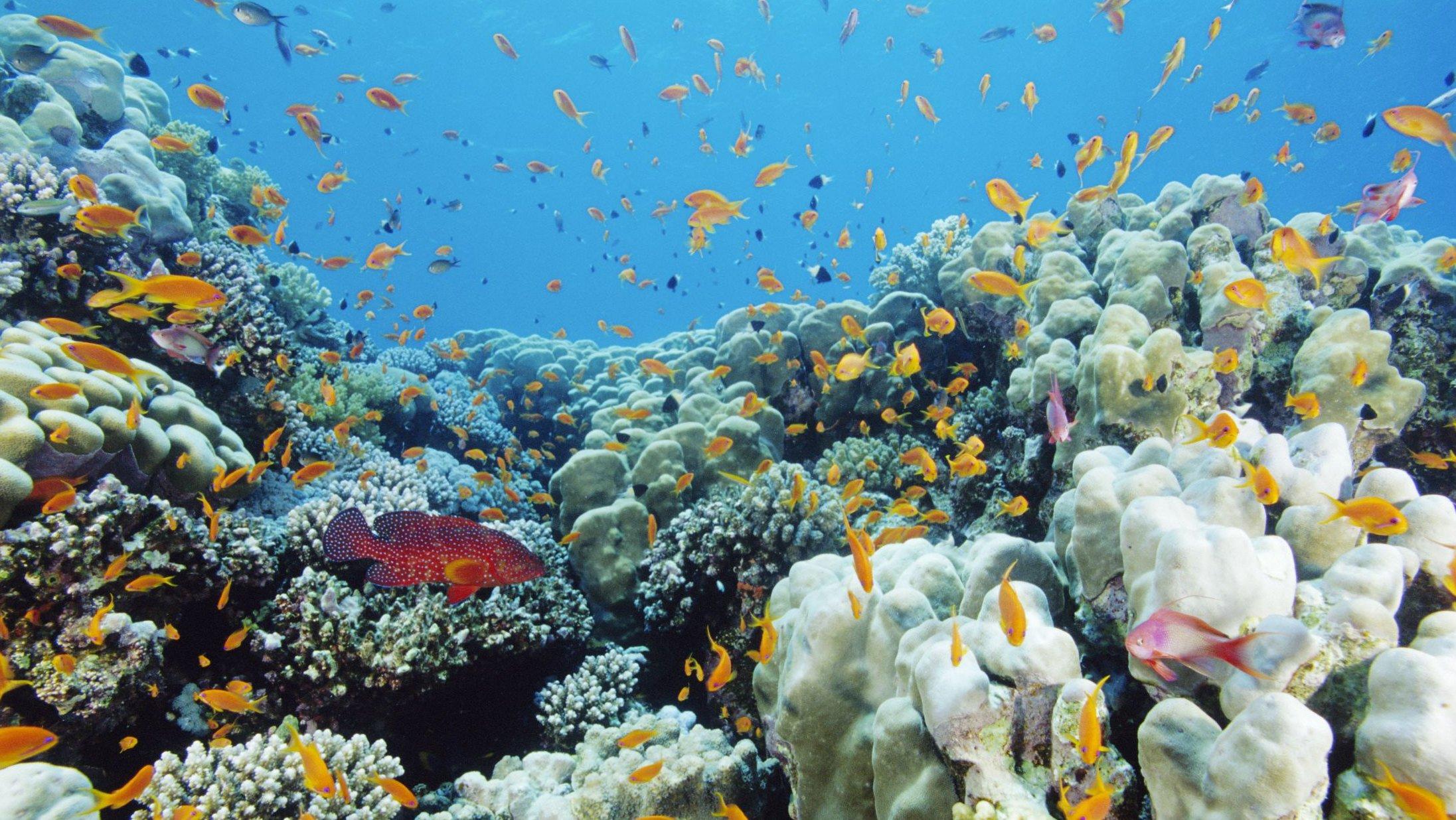 Klimaforandringerne i havet kommer til at have store konsekvenser for bl.a. Jordens koralrev.