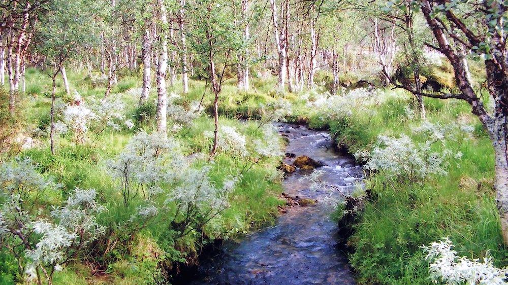 I Danmark er der mange vandløb.