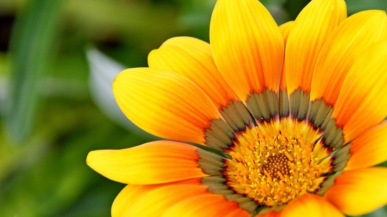 En blomst kan være så smuk, at du kan skrive digte om den.