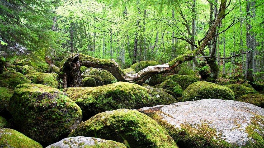 Find den mest effektive vej gennem naturen, og træn jeres parkourevner.