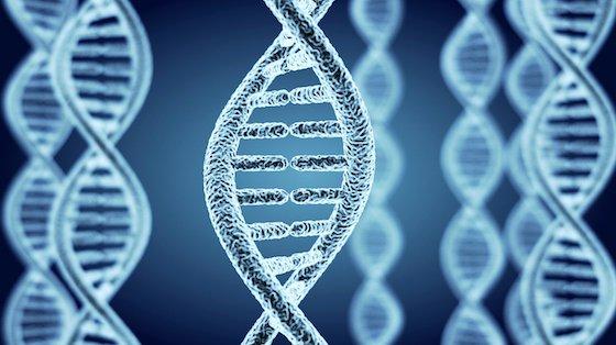 Rækkefølgen af baserne i DNA'et bestemmer meget i forhold til, hvem man er og kan blive.