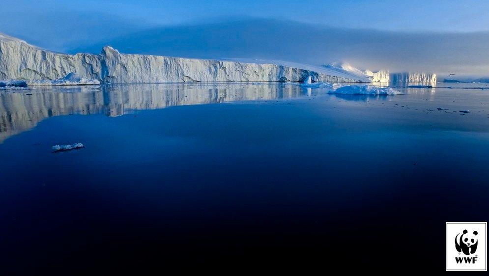 Dyk ned i Det Arktiske Hav, og undersøg plante- og dyrelivet der.